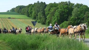Kutschenfahrer von 8 bis 80 Jahren – Odenwälder Natur mit Pferden erleben