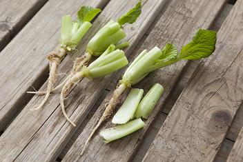 3cm程の茎残しでカット小松菜の根