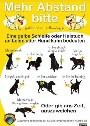 Kampagne von yellowdog.se