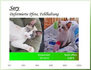 Sary - deformierte Pfote und Fehlhaltung