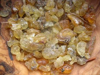 Douglasie Douglasfichte Pseudotsuga menziesii Harz Harztränen douglas fir resin Räucherwerk Räuchern incense