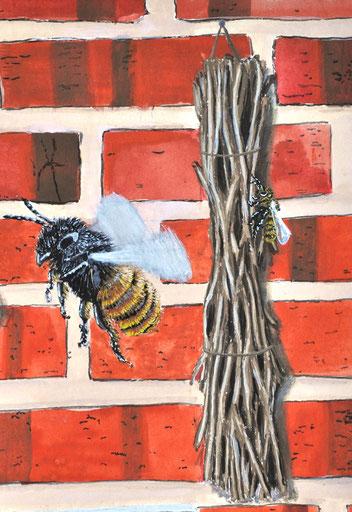 Trockene Stängel von Brombeere, Karde oder Alant dienen Wildbienen als Nistplätze.