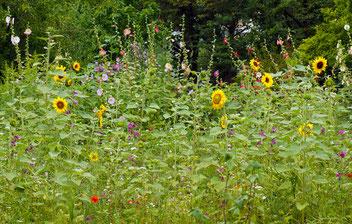 Bienenweide, Gartenarbeitsschule