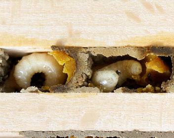 Wildbienen, Gartenarbeitsschule