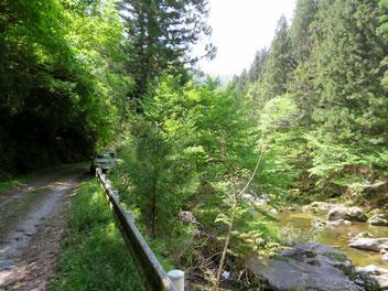 渓流沿いの林道。
