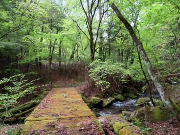 しっぽりと濡れそぼって苔むした渓流沿い。