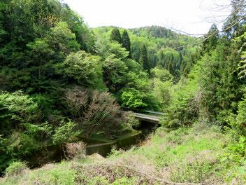 上川養鱒場奥の林道。