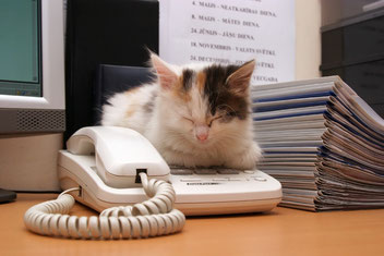 chat qui dort sur un téléphone