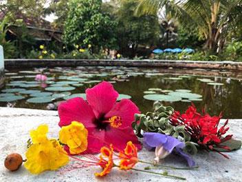 Goa, met z'n prachtige bloemen