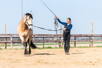 Paard zijgangen aanleren aan de longe
