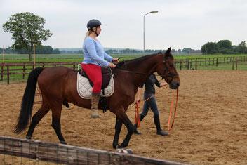 Academische rijkunst, beleren paard, Draver