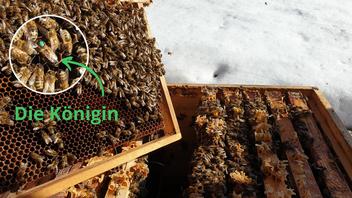 Solche Bilder lassen die Imkerherzen höherschlagen: Gesunde, vitale Bienenvölker