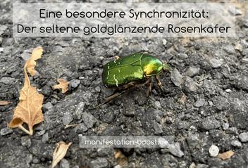 Eine besondere Synchronizität: Der seltene goldgläzende Rosenkäfer