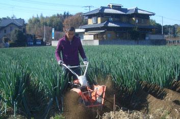【アルファイノベーション・農業生産】白ネギ生産