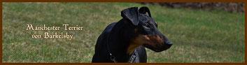 Banner,Manchester Terrier von Barkelsby, Logo