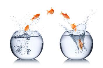 Outplacement, der Weg vom alten in einen neuen Job: Beratung, Coaching, Service, Zielerreichung bis zum neuen Arbeitsvertrag