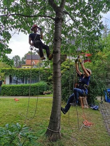 Baumklettern macht einfach unheimlichen Spaß!