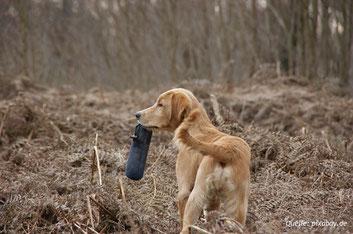 Die Dummy-Arbeit als geeignetes Jagdersatztraining