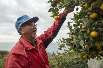 今年の湘南ゴールドについて、小田原市の農家・鈴木裕章さんに伺ってきました!