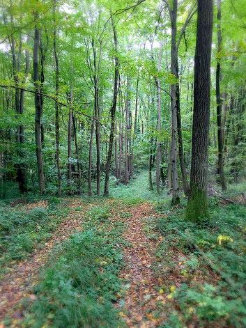 Oh du wunderschöner Wienerwald...