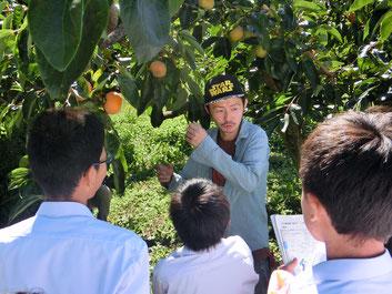 中学生に富有柿を紹介