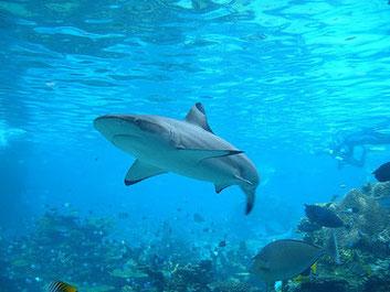 人間とサメの接触が増えることでお互いにとっての不幸が始まる CC BY 2.0 Allan Lee