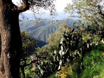 Im Hintergrund die Dörfer auf den Bergkämmem