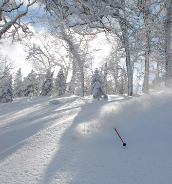 guided ski trip in Hokkaido japan