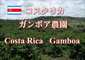 ブラジル プレミアムショコラ 深煎り