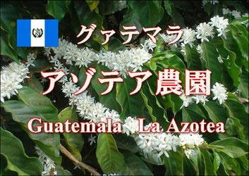 グァテマラ アゾテア農園