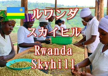 コスタリカ ガンボア農園