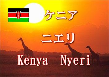 ケニア ニエリ ルトゥマ農協