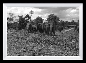 Fotografie Sri Lanka, Kandy