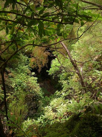 Laurisylve ou forêt laurifère - Los Tilos - La Palma