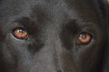 Les 3 façons de communiquer du chien