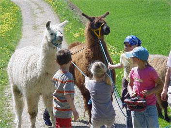 Sehr beliebt bei Kindern: Lamaspaziergänge. Bild: zvg