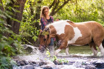 Lewitzer im Wasser Pferdefotoshooting