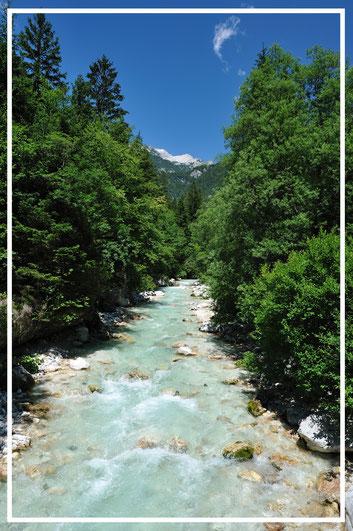 In alcuni torrenti alpini le schiuse sono molto rare e le trote sopravvivono grazie ai terrestrial caduti dagli alberi