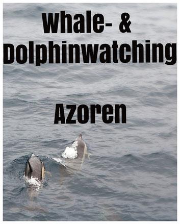 Und plötzlich schwimmen Delfine neben dem Boot...