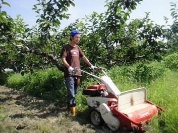 減農薬で富有柿を栽培