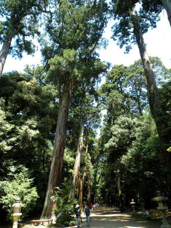 天然記念物「鹿島神宮の森」