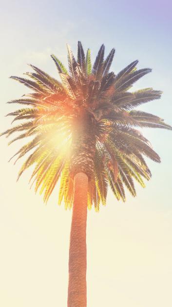 Die Geschichte von der Palme in der Oase