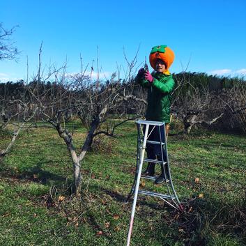 柿を農家直送