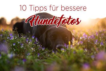 10 Tipps bessere Hundefotos_Hundefotografie_wie Hunde fotografieren_Titel
