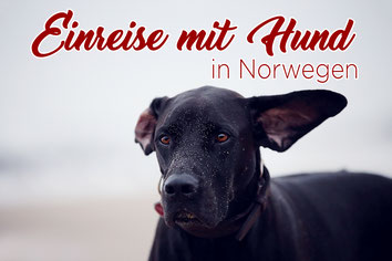 Einreise_Norwegen_Hund_Urlaub_Bestimmungen
