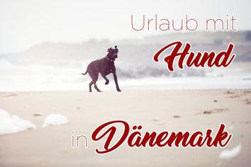 Dänemark_Hund_Erfahrungen_Hundegesetz_Die Roadies