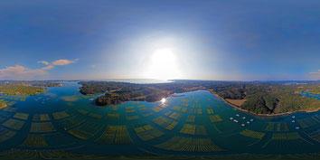 志摩市磯部町 的矢湾のアオサ養殖
