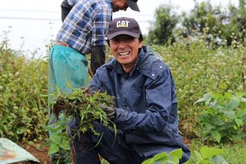 草取りをしている生産者の写真