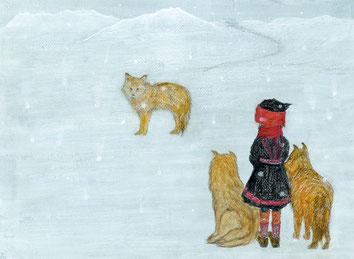 coyote 2013