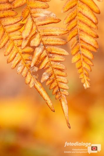 Details in der Herbstfotografie